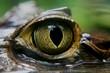 Kaiman Auge - 78101830