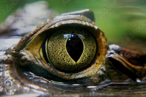 Tuinposter Krokodil Kaiman Auge