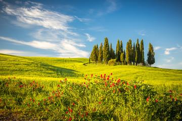 Tuscany at spring © sborisov