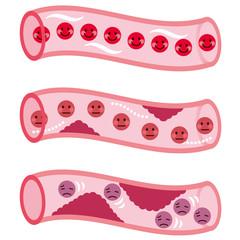 血管の断面 血液の流れ