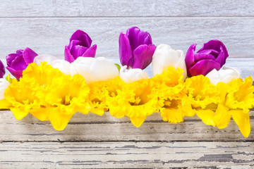 Osterglocken, Tulpen, Holz