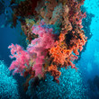 Vibrant pink soft coral (Dendronephthya hemprichi)