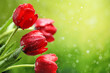 Obrazy na płótnie, fototapety, zdjęcia, fotoobrazy drukowane : Tulip flowers