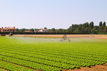 Irrigation field
