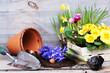 Leinwanddruck Bild - Frühling, Frühjahrsblumen pflanzen, Copyspace, Primeln, Osterglocken