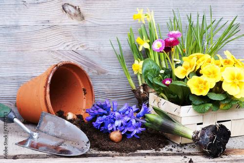 Leinwanddruck Bild Frühling, Frühjahrsblumen pflanzen, Copyspace, Primeln, Osterglocken