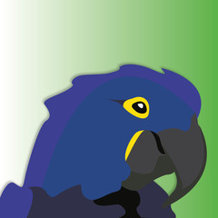 Hyacinth Macaw Illustration