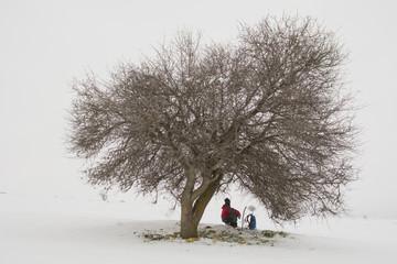 yalnız ağaç ve yalnız adam