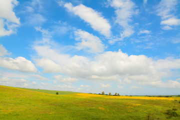 yellow and green meadow under a cloudy sky