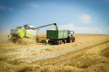 Mähdrescher beim Entladen von Getreide aus dem Tank