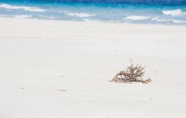 dry branch on a white beach