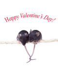 Two black little mouse sitting on a rope grappled tails. Isolate poster