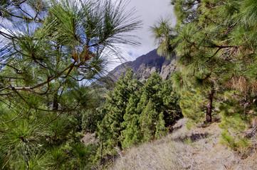 La Palma Caldera de Taburiente