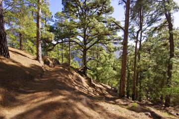 National Park Caldera de Taburiente on the island La Palma, Cana