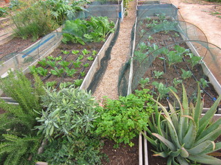 ecological garden and products