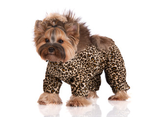 adorable dog in a leopard costume