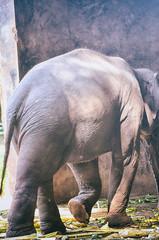 Portrait image of Wildlife Elephant