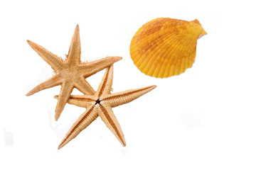 Two Starfish with the shell on the white background