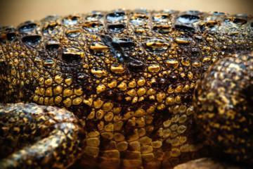 Crocodile leather texture close-up