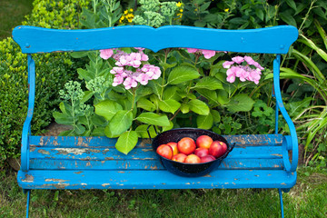 Nectarines on Bowl On Top of Garden Bench.