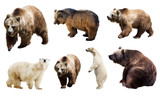 Set of many bears. Isolated over white