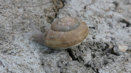 snail on concrete ground, close-up