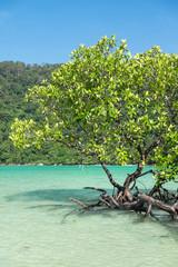 Mangrove plants