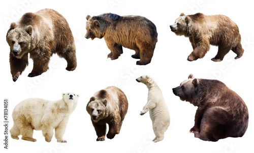 Tuinposter Ijsbeer Set of many bears. Isolated over white