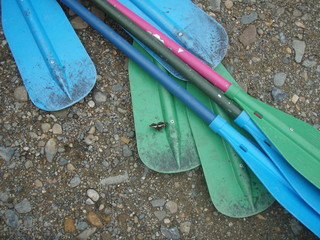 Several oars and butterfly