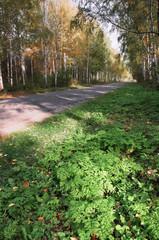 Осенний пейзаж в парковой зоне. Аллея