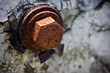 canvas print picture - Old Weathered Rusted Hex Bolt Close Up Background