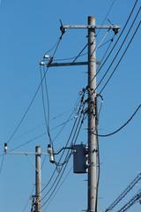 電信柱と送電線