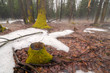 Spring Thaw in a Forest with Fog