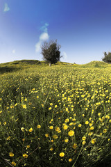 Blossoming field with camomiles and bush
