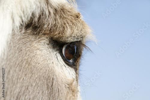 Poster Ezel Auge eines Esels
