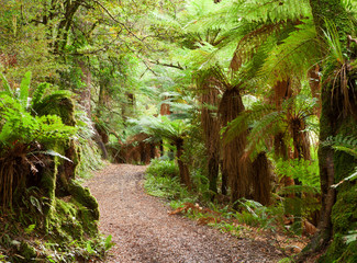Road in temperate rain forest , New Zealand