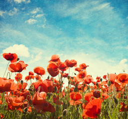 Field of poppies   against  sky. Added paper texture