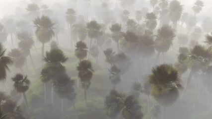 Aerial view of palm trees in mist