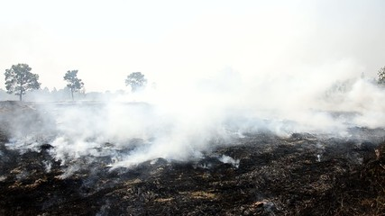 Smoke and flames occur from Stubble burning rice straw