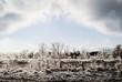 Frozen Landscape After an Ice Storm - 78151821