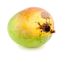 Semi-ripe tropical mango isolated on white