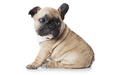 Cute little French bulldog puppy sitting on white background