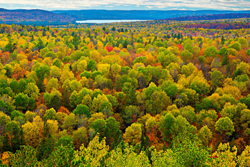 Colourful Tree Tops in an Autumn Forest