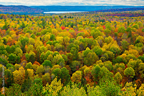 Foto op Aluminium Bossen Colourful Tree Tops in an Autumn Forest