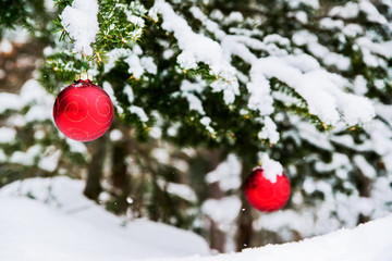 Two Christmas Baubles on a Snowy Tree