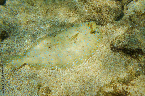 Foto op Plexiglas Pauw Underwater Peacock flounder fish on the seabed