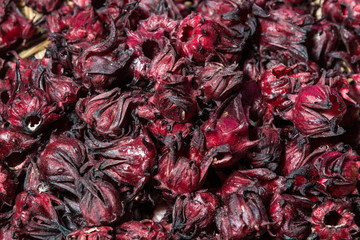 Many of Roselle fruits(Hibiscus sabdariffa)
