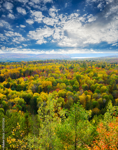 Fall Tree Tops in a Forest