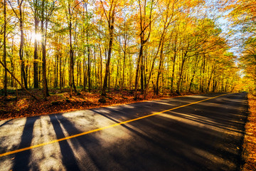 By the Colorful Treed Autumn Countryside Road