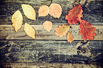 Autumn Leaves Scattered on Rustic Boards - Vintage
